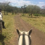 Costa_rica_horseback_landscape