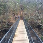 Rinjon_De_La_Vieha_Costa_Rica_Catarata_waterfall_oropendola_excursion_sky_bridge_hike