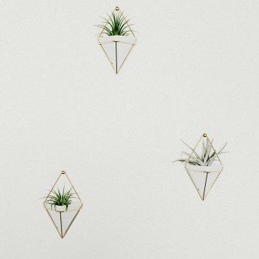 minimal-plants-suculents-wall-decor